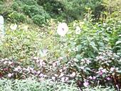 fp-20121008-29s.jpg