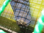 kacyouen-20130127-10s.jpg
