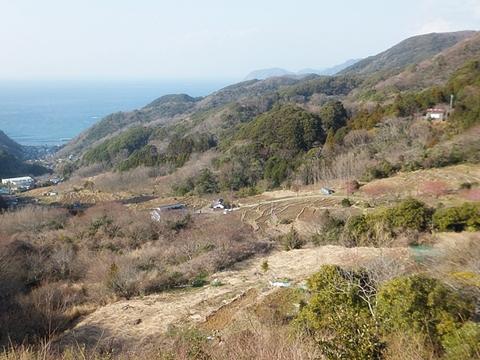 kawadu-20130302-31s.jpg