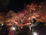 nijinosato-20111126-13s.jpg