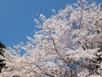 nijinosato-20120407-04s.jpg