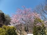 nijinosato-20120407-10s.jpg