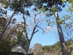 nijinosato-20120407-23s.jpg