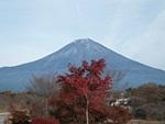 tanukiko-20111127-03s.jpg