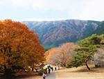 tanukiko-20121125-10s.jpg