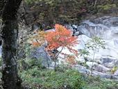 yamanashi-20121103-40s.jpg