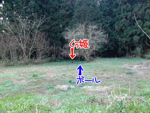 森林サッカー