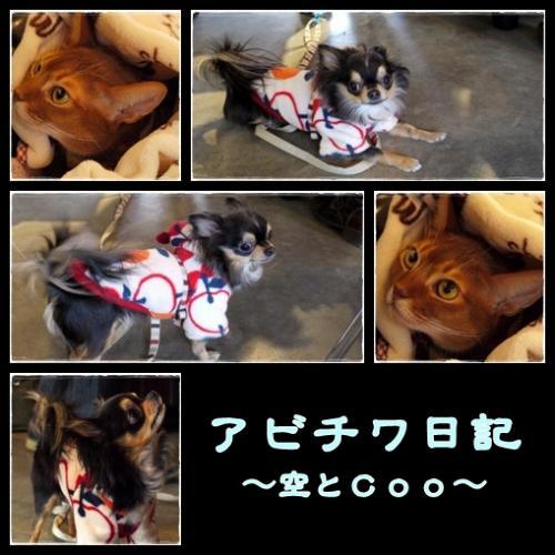 空ちゃん&cooちゃん