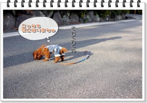 752_20101124213621.jpg
