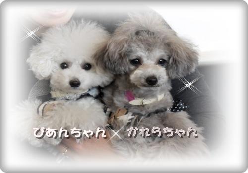 856_20110110130033.jpg