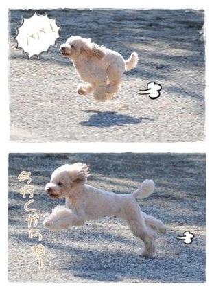 will_20101215213429.jpg