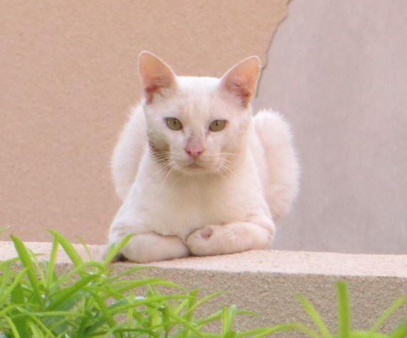 猫2012060701