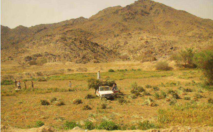 AlQablyah付近2