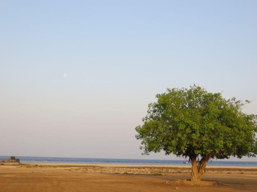 夜明けの満月と紅海1