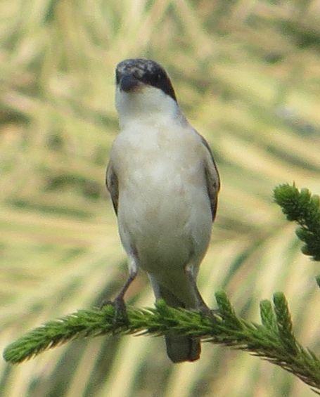 サウジの鳥83005