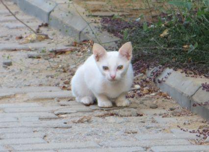 猫16101433