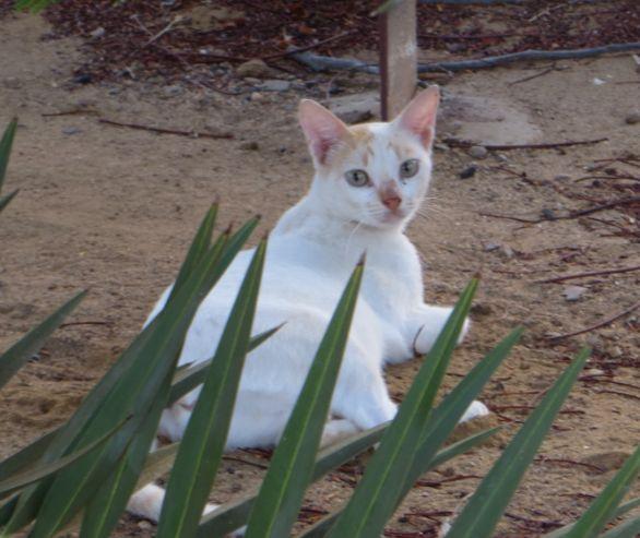 猫1610143302
