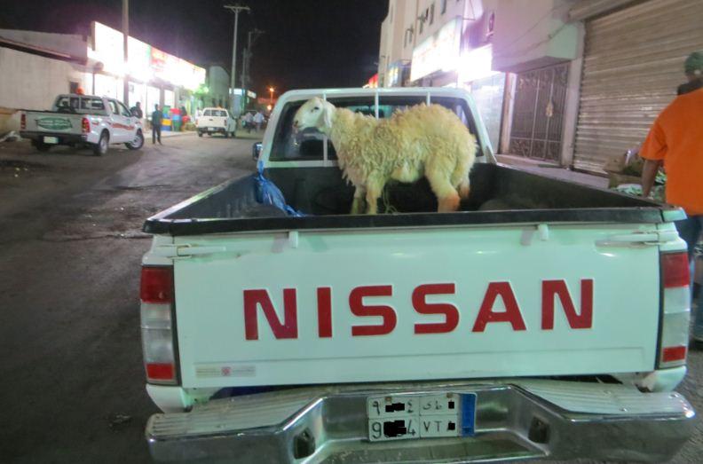 犠牲祭用の羊かな