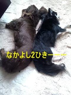 2011-0324-133721580.jpg