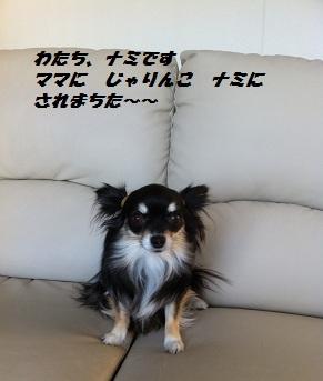 IMG_0332.jpg