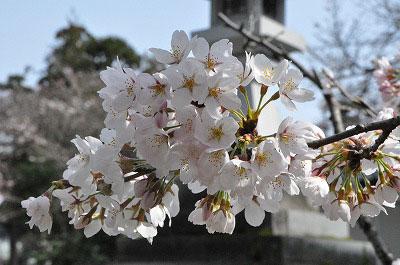 201104-saku1100.jpg