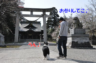 201104-saku1101.jpg