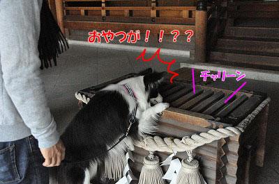 201104-saku1103.jpg