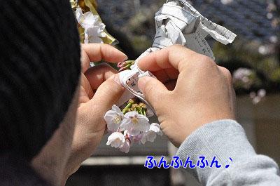 201104-saku1104.jpg