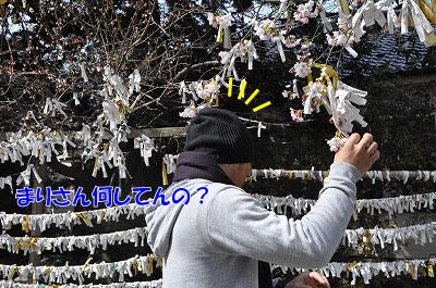 201104-saku1105.jpg