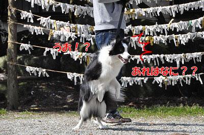 201104-saku1106.jpg