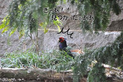201104-saku1107.jpg