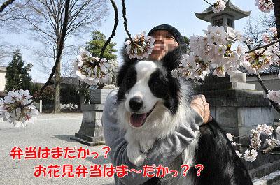 201104-saku1108.jpg
