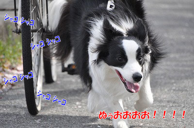 201104-sanp06.jpg