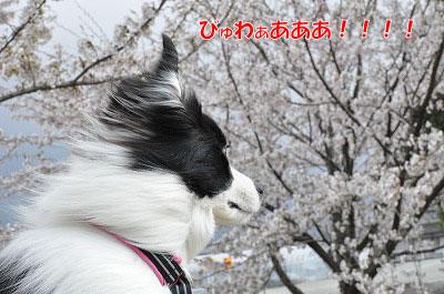 201104016-okaze05.jpg