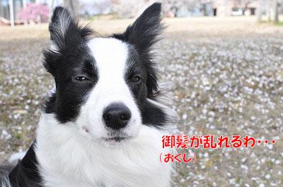 201104016-okaze06.jpg