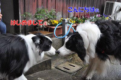 20110501-kisen03.jpg