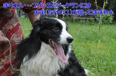 20110501-kisen04.jpg
