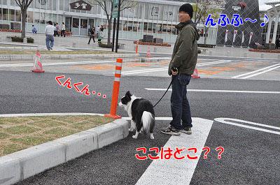 20110501-sa01.jpg