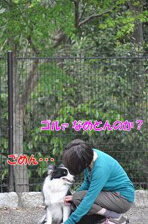 20110501-sa09.jpg