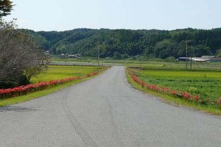 どこぞの神社の山道の道