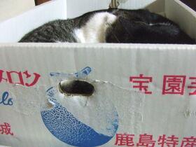 超高級メロン箱ベッド