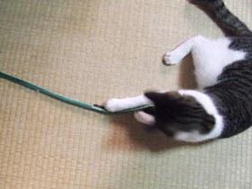 動く紐ほど
