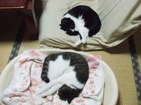 三豆の平穏な睡眠
