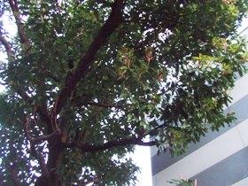 名も知らぬ木