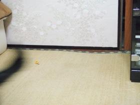 走り去る黒いしぽ