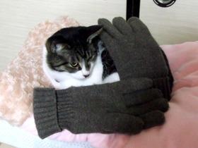 手袋に抱かれて