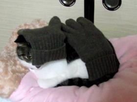 手袋に撫でられて