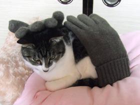 手袋に乗られて