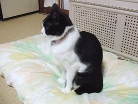 ご覧下さいこの見事な猫背