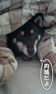 101222_okota.jpg
